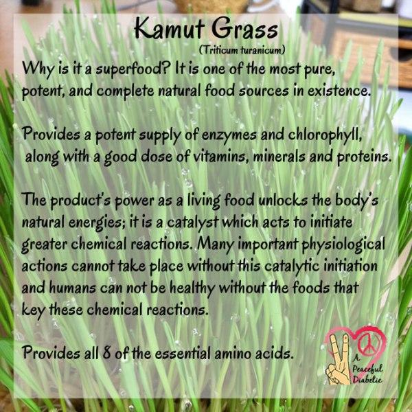 Kamut Grass (triticum turanicum)